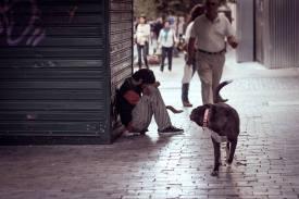 Best friend of man // Athens, Greece