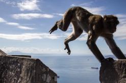 Ape's Jump // Gibraltar