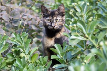 Catwarden // Granda, Spain