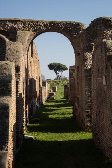 Antic Tree // Ostia Antica, Italy