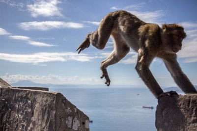 The monkeys are also known for stealing food and belongings from tourists visiting the hill.
