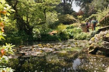 The japanese Garden in the Powerscourt Gardens.