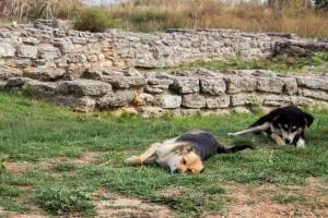 Dog's Life // Kap Emine, Bulgaria